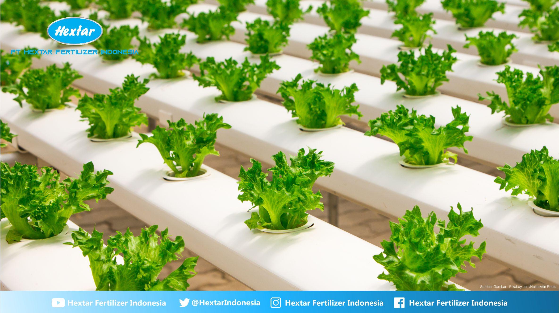 Melirik Peluang Bisnis Pertanian Yang Menguntungkan di ...